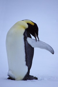Show Antarktis_DSC8957